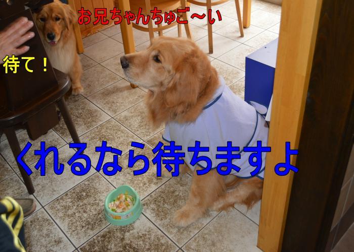 DSC_0643_convert_20130320163045.jpg