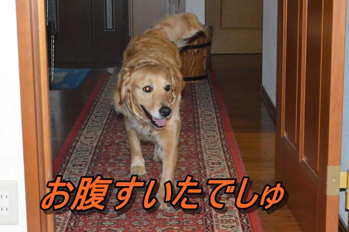 DSC_0647_20130602215304.jpg