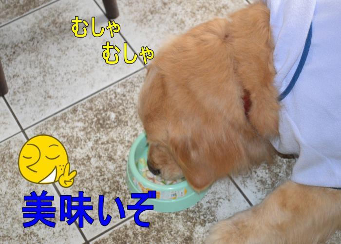 DSC_0647_convert_20130320163324.jpg