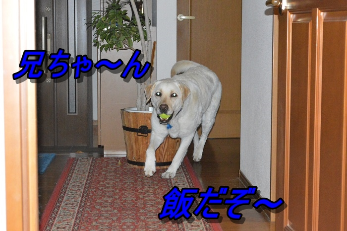 DSC_0648_20130602215304.jpg