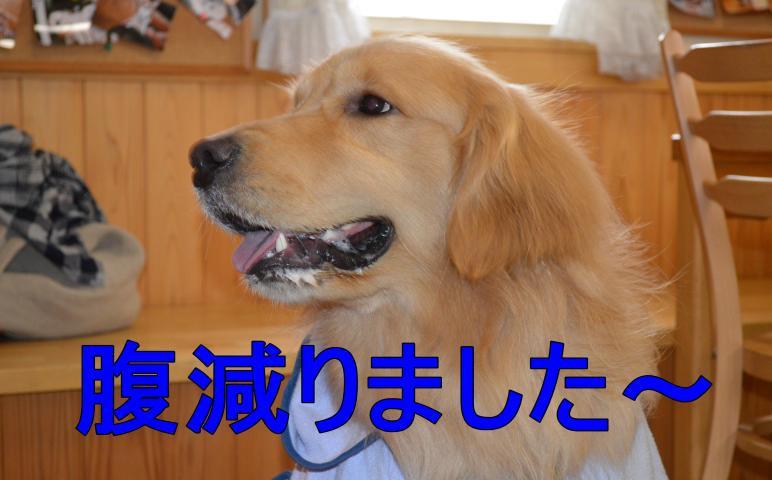 DSC_0670_convert_20130320195227.jpg
