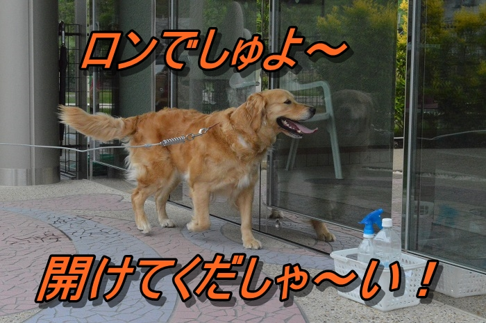 DSC_0696_20130603220524.jpg