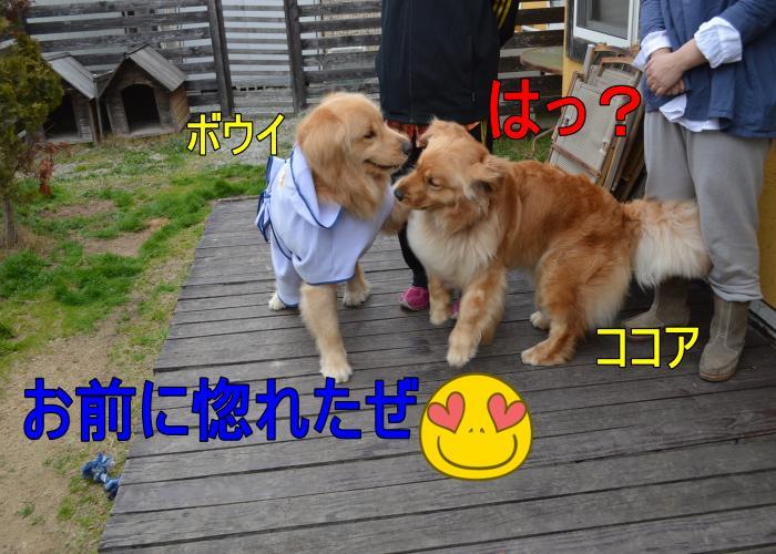 DSC_0710_convert_20130320165346.jpg