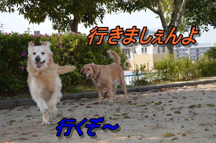 DSC_0722.jpg