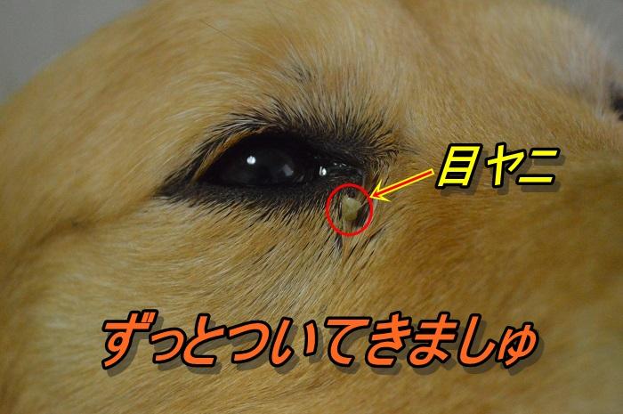 DSC_0754.jpg