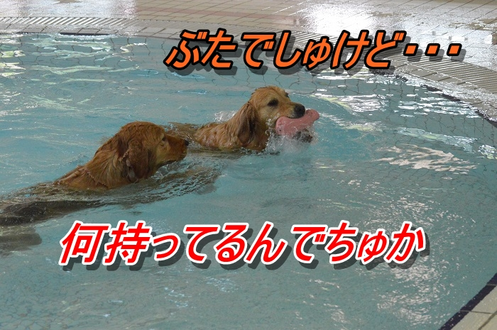 DSC_0768_20130603221102.jpg