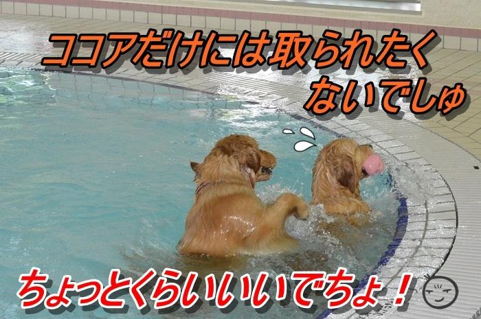 DSC_0776_20130603221344.jpg