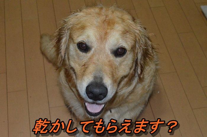 DSC_0856_20130619221007.jpg