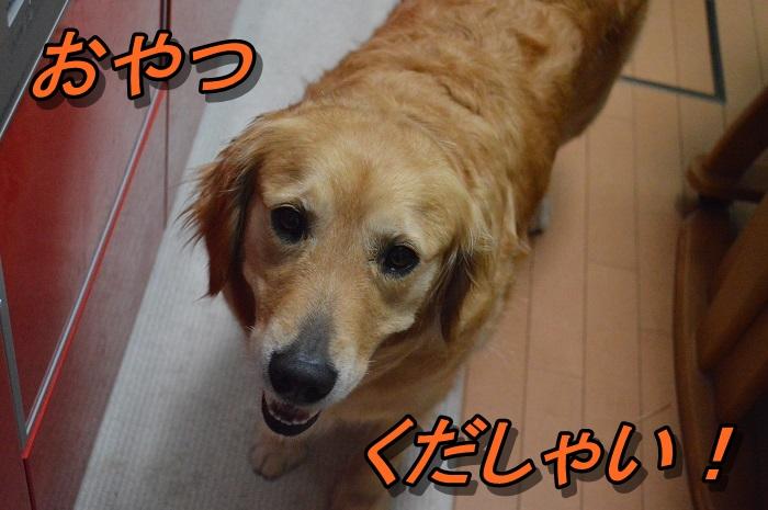 DSC_0865_20130619221018.jpg