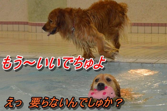 DSC_0934_20130604230246.jpg
