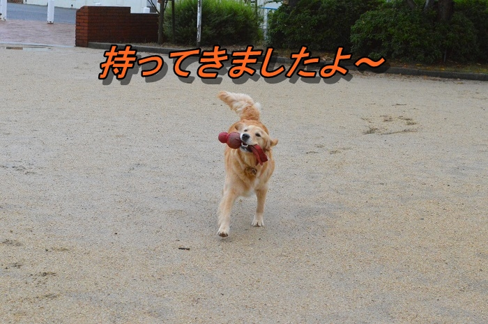 DSC_0947_20130621213823.jpg