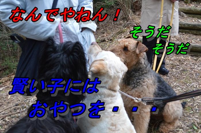 DSC_10288.jpg