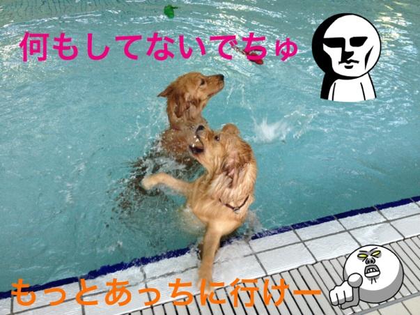 IMG_6963.jpg
