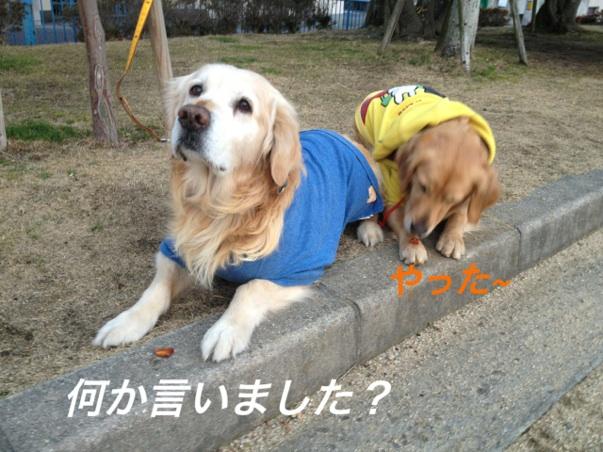 IMG_7385.jpg