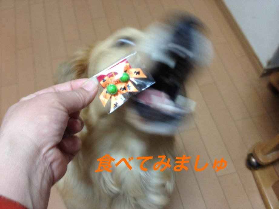 IMG_9032.jpg