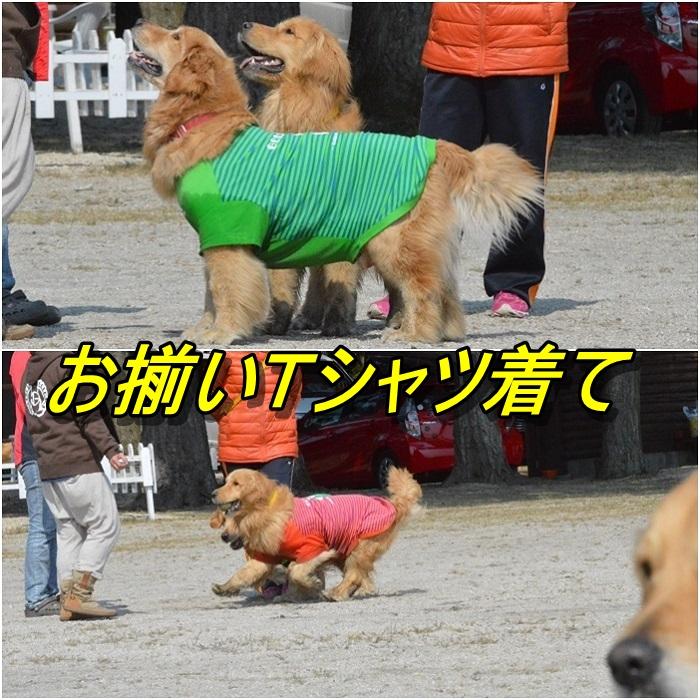 page_20130510205459.jpg