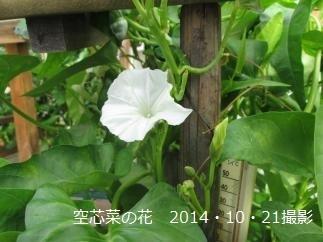 IMG_5058_convert_20141021125529.jpg