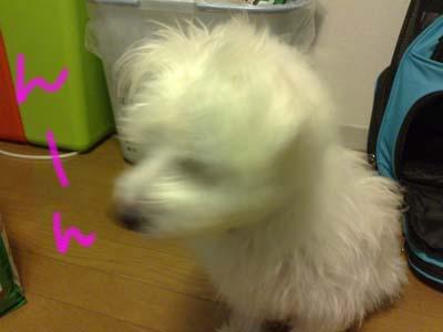 shiro_iya.jpg