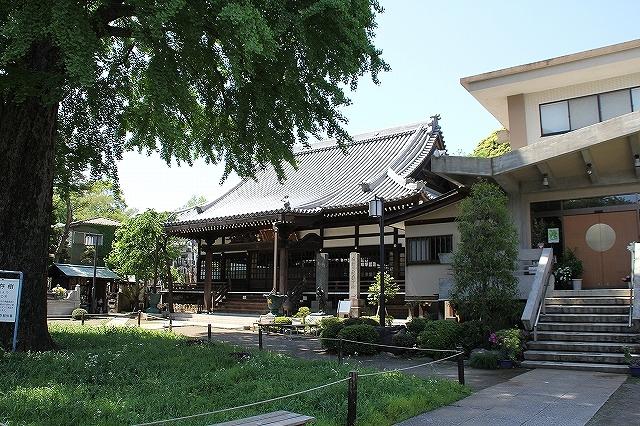 常円寺と大銀杏