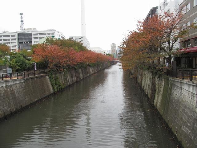 目黒川の流れ_1