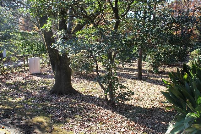 天明家の庭