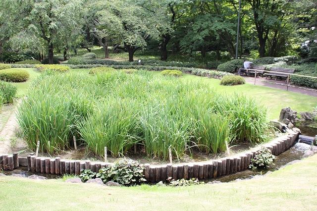 二の丸庭園_1