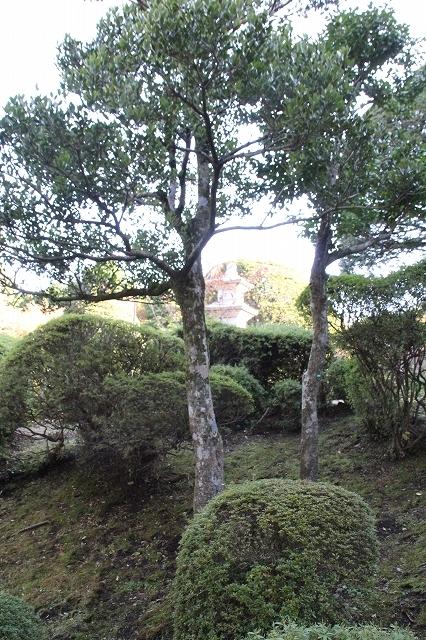 宿の庭_3