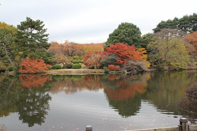 中の池_6