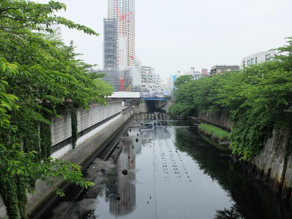目黒川_1