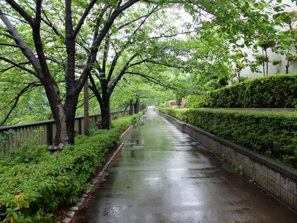 目黒川_5