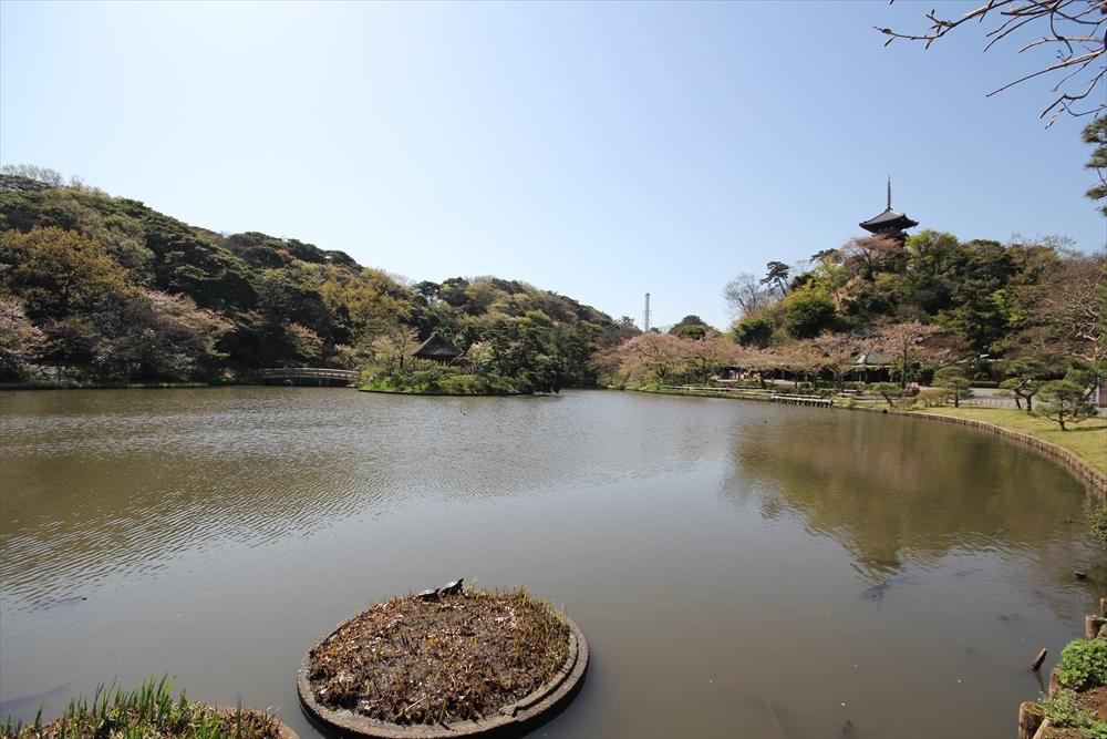 睡蓮池の前辺りから見た大池_1