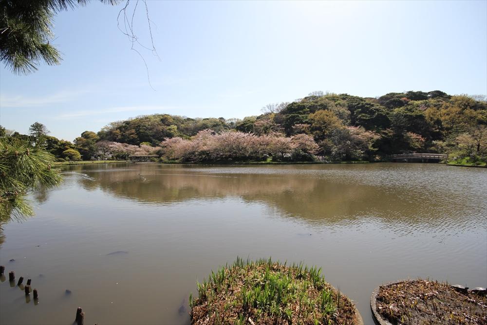 睡蓮池の前辺りから見た大池_2
