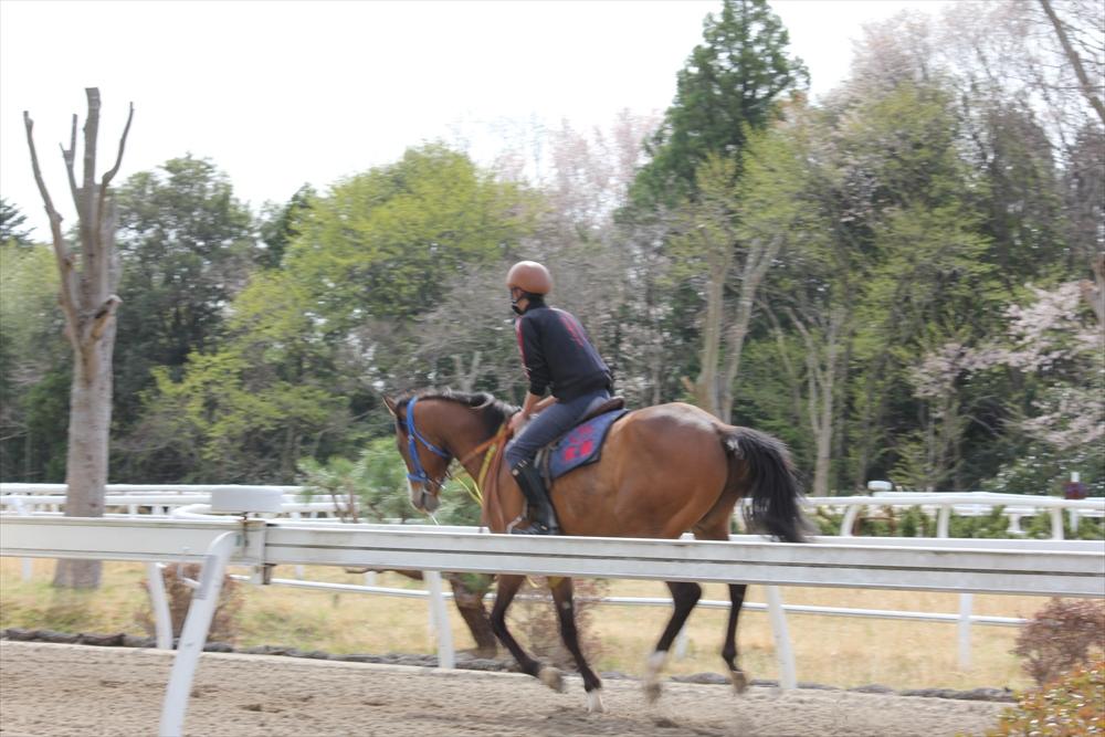 馬場でのトレーニング光景_2