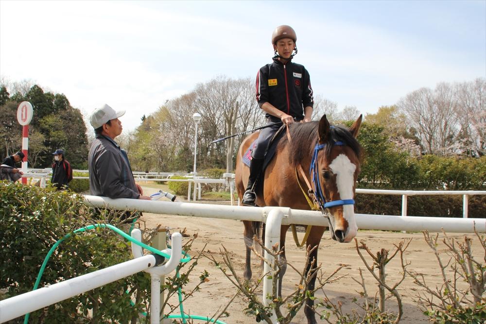 馬場でのトレーニング光景_5
