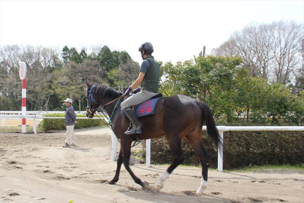 馬場でのトレーニング光景_9