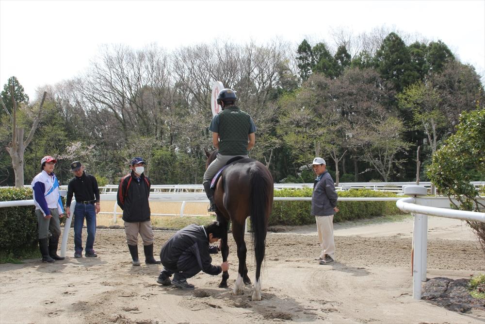 馬場でのトレーニング光景_13