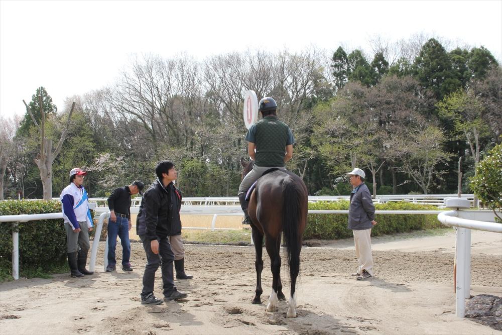 馬場でのトレーニング光景_15