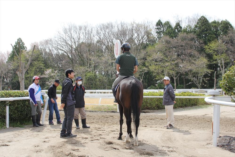 馬場でのトレーニング光景_16