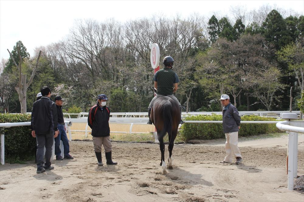 馬場でのトレーニング光景_17