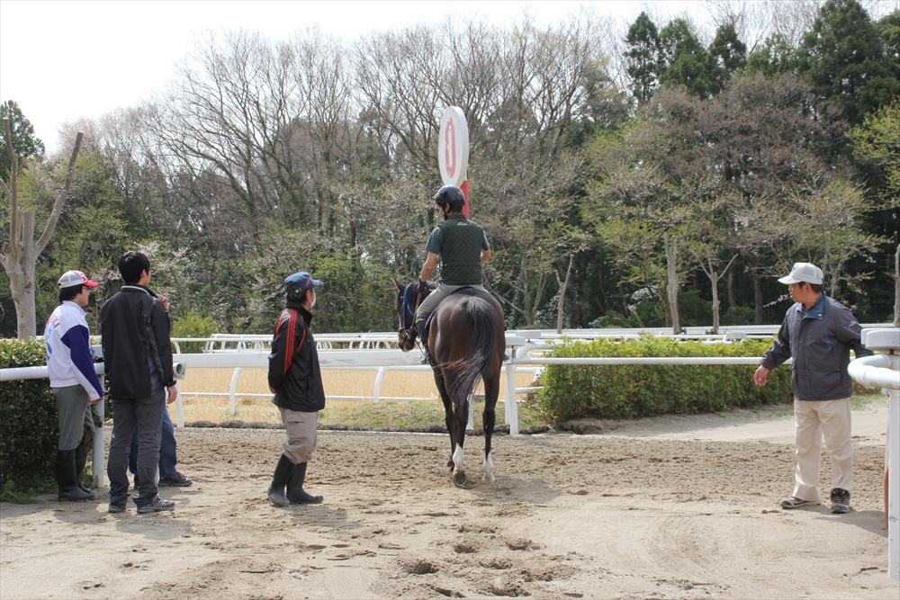 馬場でのトレーニング光景_19