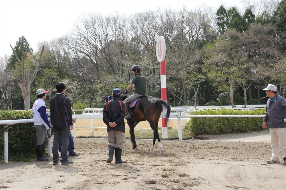 馬場でのトレーニング光景_20