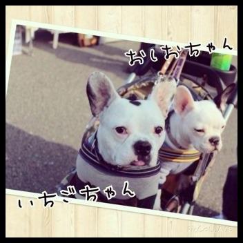 IMG_9729.jpg