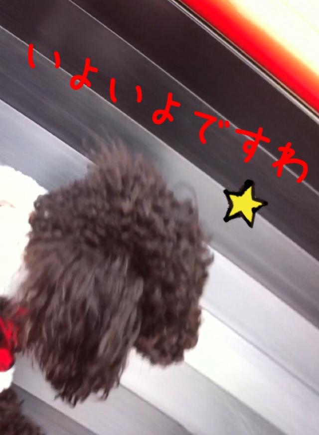 moblog_910d9962.jpg