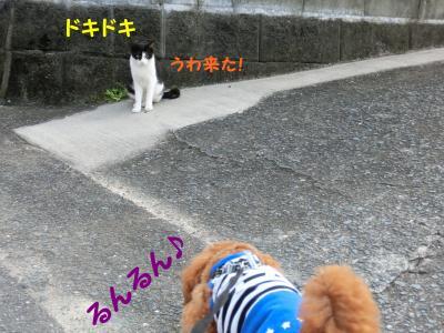 CIMG0397_convert_20120812210209.jpg