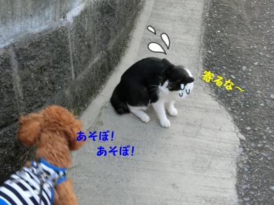 CIMG0400_convert_20120812210455.jpg