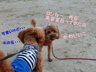 CIMG0951_convert_20120828104256.jpg