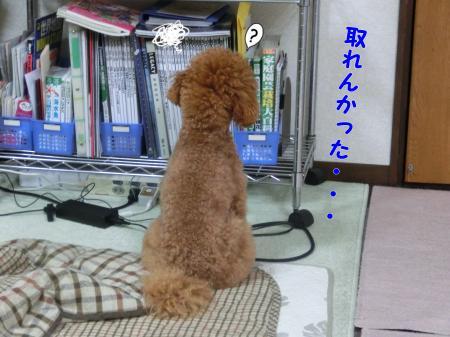 CIMG4250_convert_20130507204955.jpg