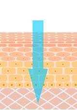 電解還元性イオン水のデリバリー作用