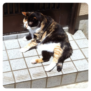 江ノ島の猫写真