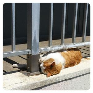江ノ島の猫写真・はさまってる